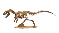 Allosaurus Dinosaur (Anatomically Correct)