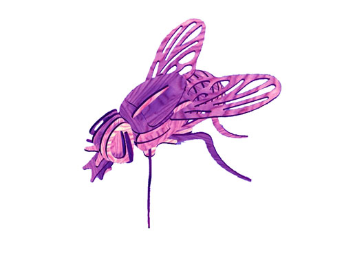 Creative Fly (plasma)