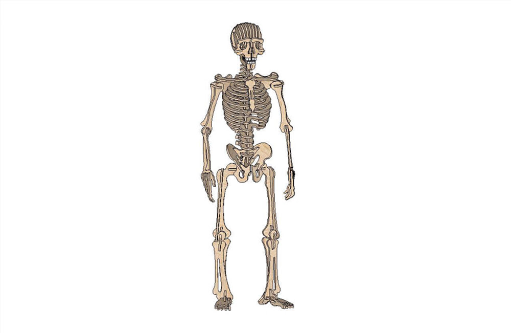 Complex Human Skeleton - Halloween | MakeCNC.com